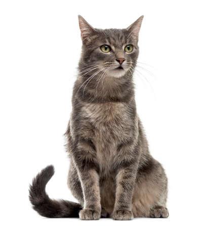 Kat zitten in de voorkant van een witte achtergrond Stockfoto
