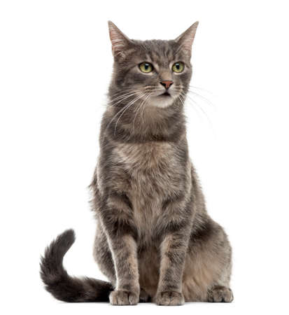 Katze sitzt vor einem weißen Hintergrund