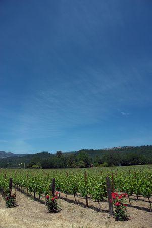 napa valley: USA, California, Napa Valley Stock Photo