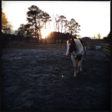the deep south: Horse farm in north Georgia, USA