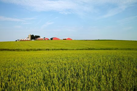 farmstead: A landscape of a typical midwestern American farm on a sunny June day Stock Photo
