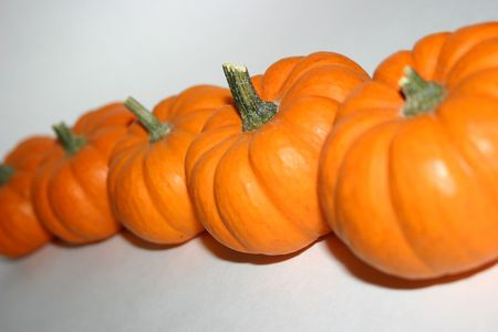 lined up: Pumpkins lined up in a row.