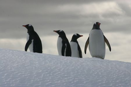 PENGUINS ON ICEBERG 2