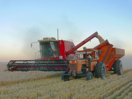 WHEAT HARVEST IN THE PLAINS OF ARGENTINA Stock Photo