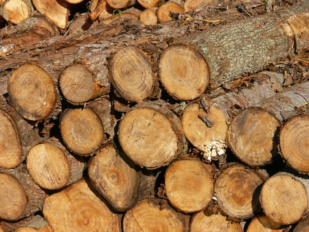 tigre: WOOD PRODUCTION FROM THE TIGRE DELTA IN ARGENTINA Stock Photo