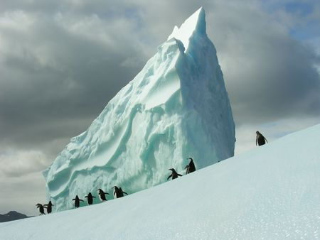 small group of papua penguins on an iceberg photo