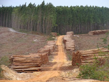 Piles of wood in a forest exploitation Stock Photo