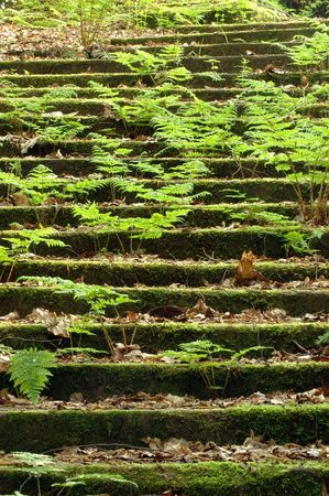 Ancient Steps deep within a Forest photo