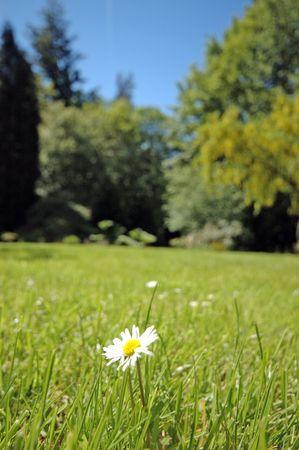 Summer Field Stock Photo - 438001