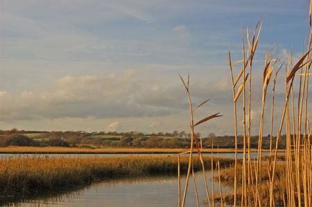 Reeds at sunset photo