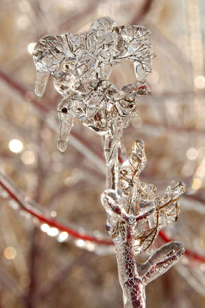 Photo of branches covered in ice after an ice storm