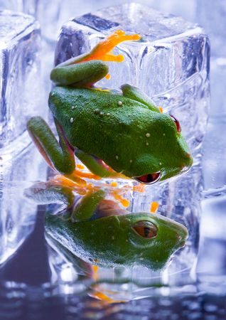 Cold frog Stock Photo - 763379
