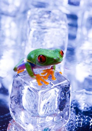 colours tints: Cold frog