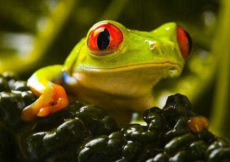 colours tints: Wet frog
