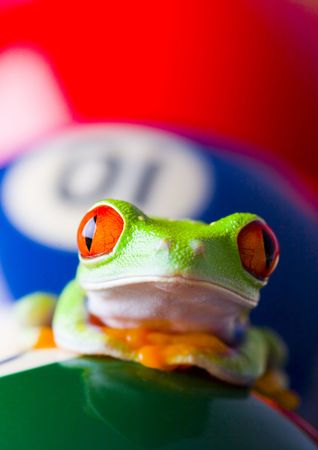 colours tints: Frog on the balls Stock Photo