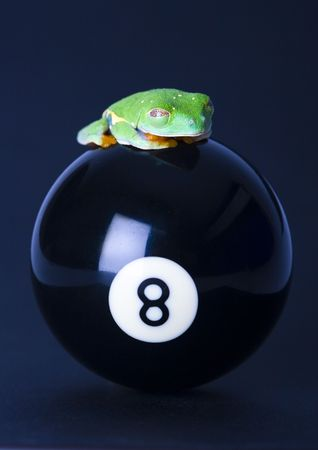 colours tints: Frog on the ball