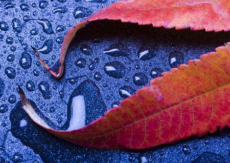 happieness: Water Leaves