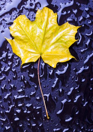happieness: Leaf