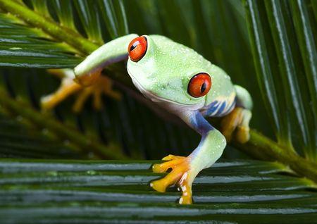 Frog Stock Photo - 788081