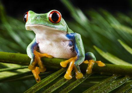 jungle green: Frog Stock Photo