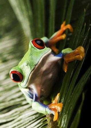 Frog Stock Photo - 788085