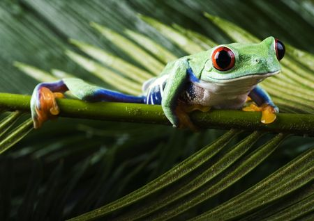 Frog Stock Photo - 788087