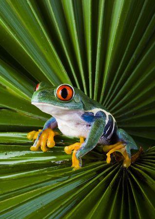 Zielony Zdjęcie Seryjne