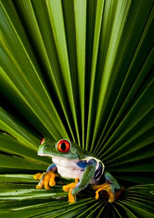 adaptation: Frog Stock Photo