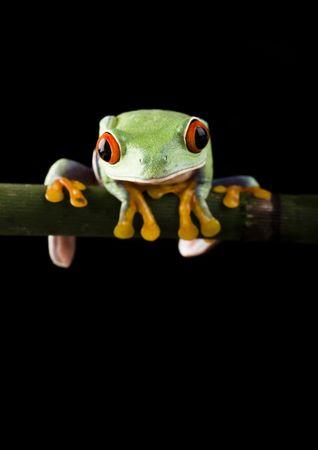 Frog Stock Photo - 788288