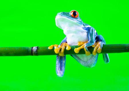 Crazy frog Stock Photo - 788259