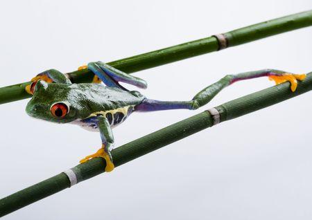 colours tints: Crazy frog