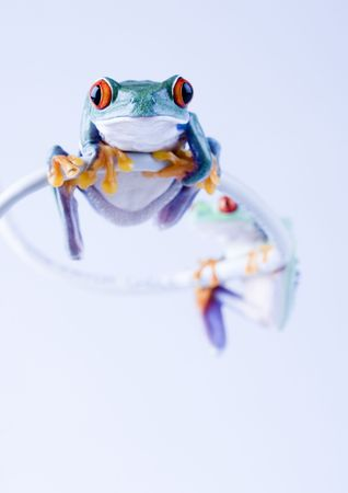 Crazy frog Stock Photo - 788224