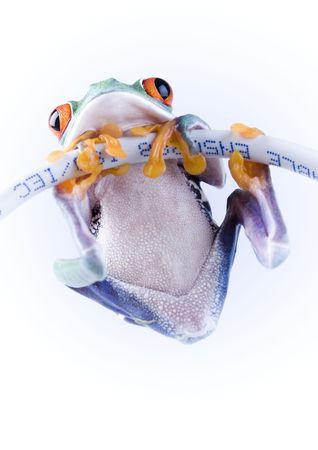 Net frog Stock Photo - 785898