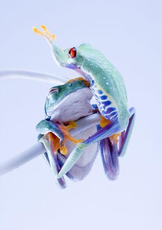 Net frog photo