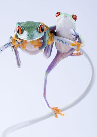 Crazy frog Stock Photo - 788150