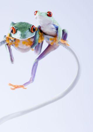 extintion: Crazy frog