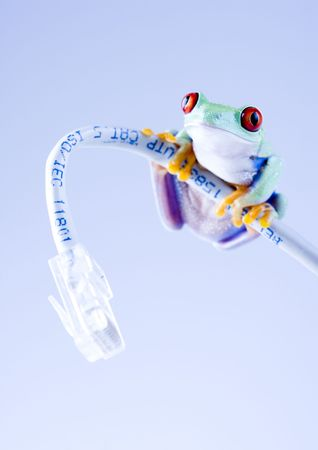 Net frog Stock Photo - 788143
