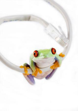 Crazy frog Stock Photo - 788148