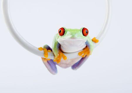 Internet frog Stock Photo - 788147