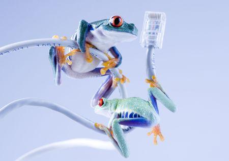 Crazy frog Stock Photo - 788146