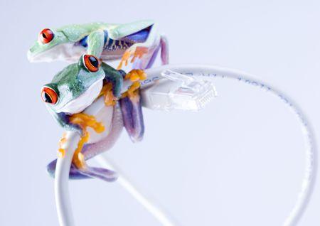 Internet frog Stock Photo - 788144