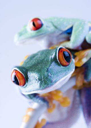 Crazy frog Stock Photo - 788142