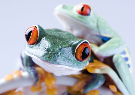 Internet frog Stock Photo - 787106