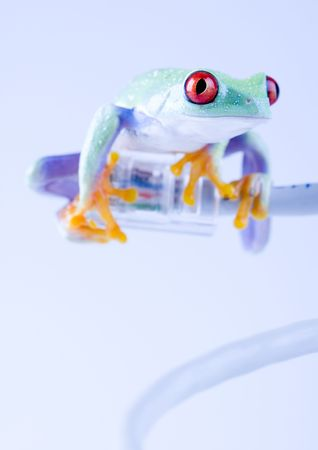 extintion: Internet frog Stock Photo