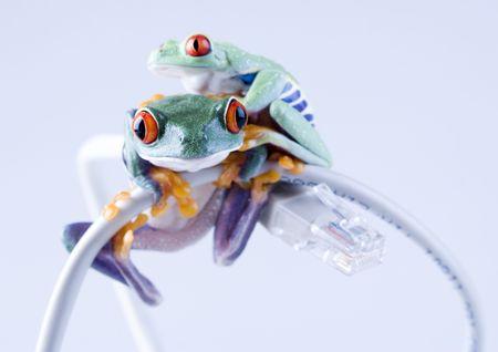 extintion: Internet frog Stock Photo