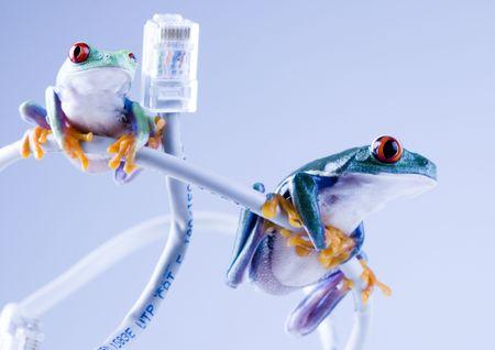Web frog Stock Photo - 788051