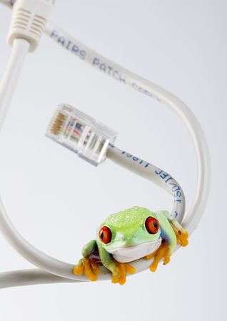 Internet frog photo