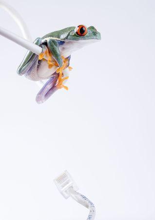 Web frog photo