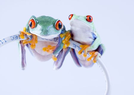Internet frog Stock Photo - 788049