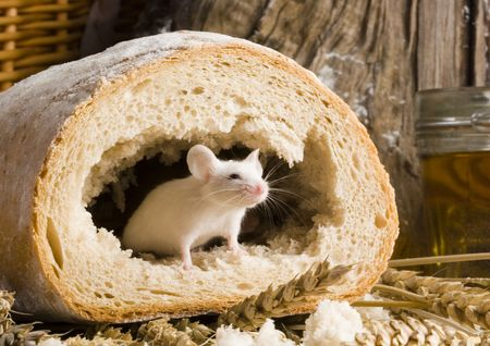 Mouse in a loaf Stock Photo - 786153